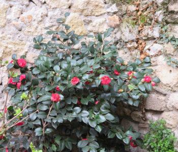 N°15-Avignon-jardin-12