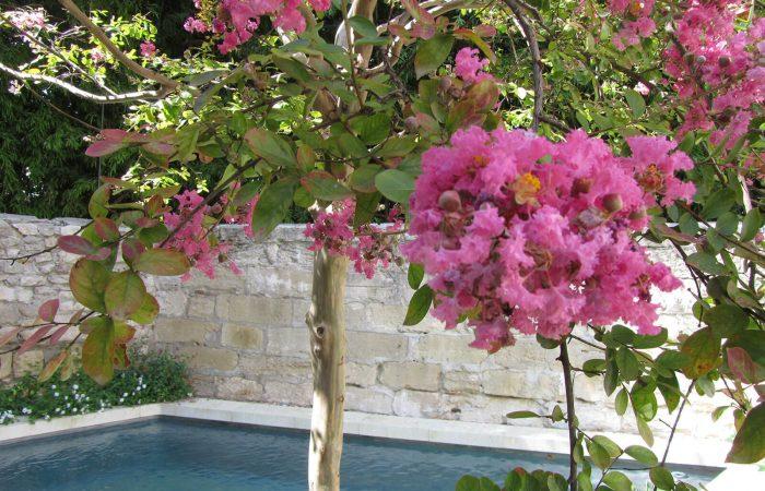 N°15-Avignon-jardin-14